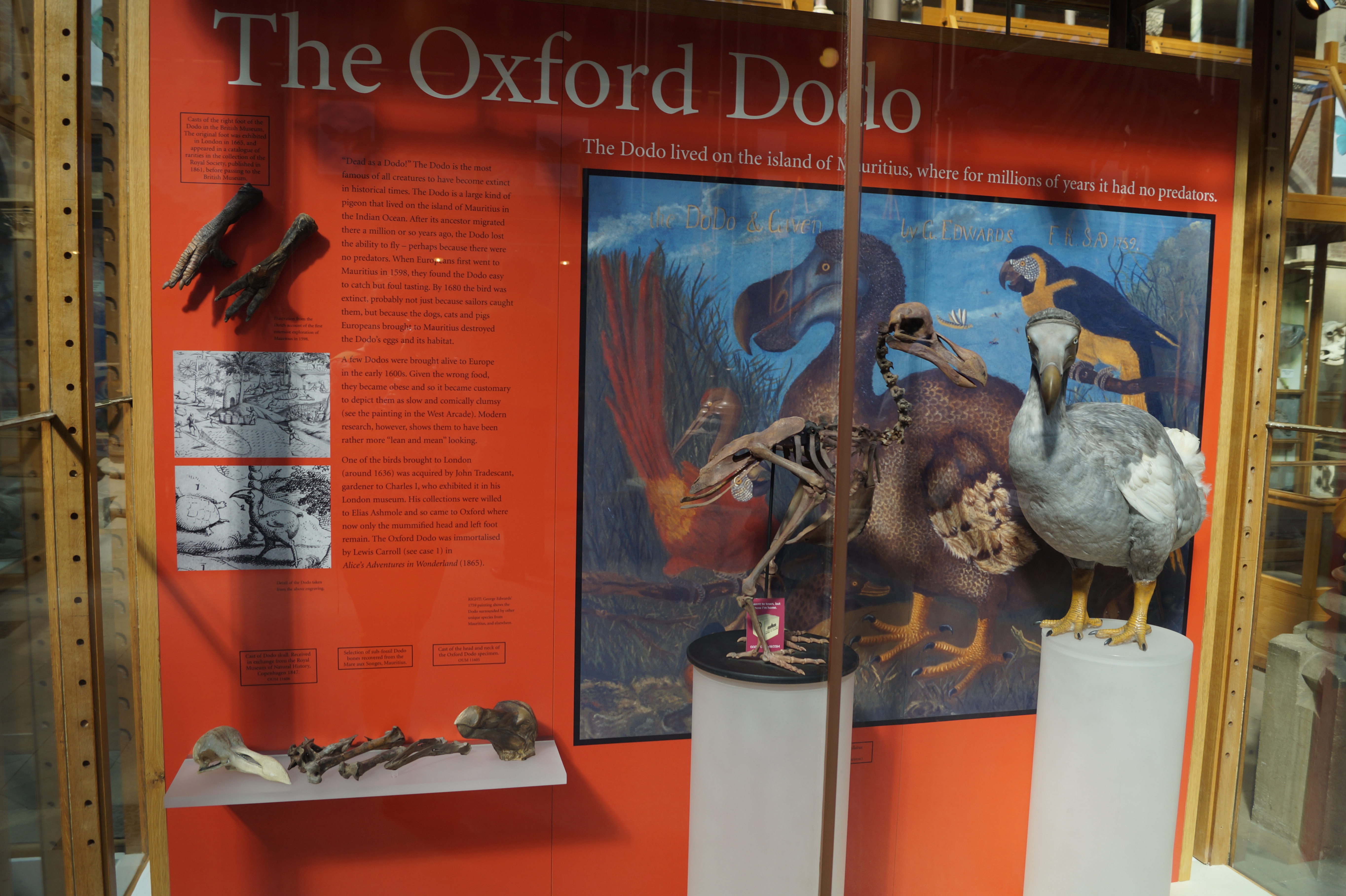 oxford-menni-kulfold-harry-potter